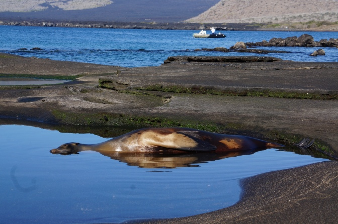A Fairytale in the Galapagos