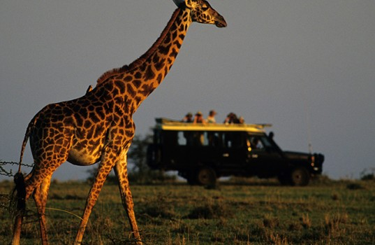 On the Blog: African Safaris for Families
