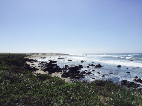Elephant seal beach // (c) Janeen Christoff