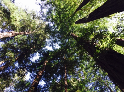 Redwoods in Big Sur // (c) Janeen Christoff